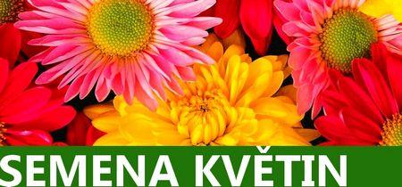 Květiny semena