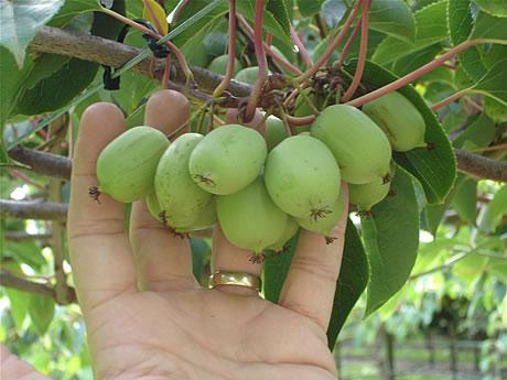 http://www.rostliny-semena.cz/galerie/1317717748.jpg