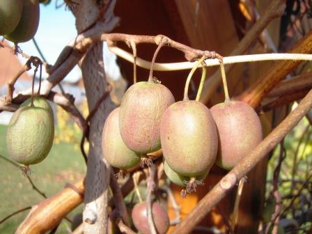 http://www.rostliny-semena.cz/galerie/1317718927.jpg