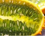 Kiwano - africký meloun (rostlina: cucumis metuliferus) - semena kiwana 10 ks *
