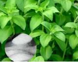 Stévie sladká (Stevia rebaudiana) cca 12 semen