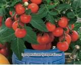 Rajče keříčkové, balkónové - semena rajčete 0,2g