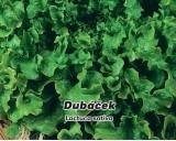 Salát listový - Dubáček - semena salátu 0,5g