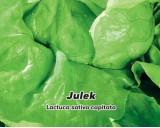 Salát hlávkový letní - Julek - semena salátu 0,5g