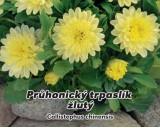 Astra Průhonický trpaslík - Žlutá - semena 0,5g