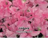 Hrachor vonný - Růžový - semena hrachoru 3g