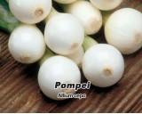 Cibule jarní lahůdková Pompei