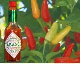 Tabasco Chilli (rostlina: Capsucum) 10 ks, pálivost 7/10