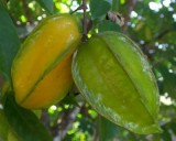 Karambola - Hvězdné ovoce (rostlina: averrhoa carambola) - 5 semen karamboly