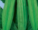 Ibišek jedlý - Okra - semena ibišku 4 g