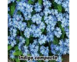 Pomněnka lesní Indigo