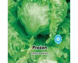 Salát hlávkový ledový - Pražan - semena salátu 0,5g