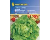 Hlávkový salát Attractie – semena hlávkového salátu