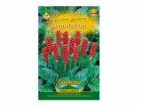 Arum italicum/aron/2ks/jpdd
