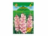 Gladiolus PRISCILLA/PINK LADY 7ks/VE/jcc ===