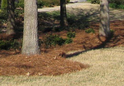 Mulčovaná pôda okolo stromov