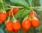 Goji - Kustovnice (Lycium chinense) 7 semen