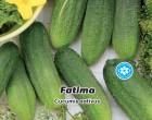 Okurka nakládačka jemnoostná Fatima F1