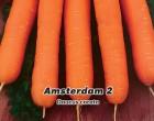 Mrkev raná, karotka - Amsterdam 2 - semena mrkve 3g