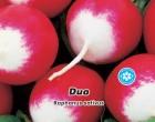 Ředkvička červenobílá Duo