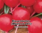 Ředkvička, máslová obří - Riesenbutter - semena ředkvičky 5g