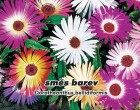 Kosmatec sedmikráskovitý - Směs barev - semena kosmatce 0,3g