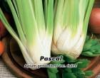 Celer řapíkatý - Pascal - Semena - 400 s