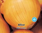 Cibule jarní žlutá Alice