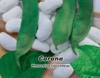 Fazol tyčkový - Velkozrný - Corona - Semena - 1,5 g