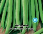 Fazol tyčkový - Zelenoluský - Belmonte - Semena - 15 g