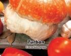 Okrasné tykvičky Turban