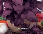 Bazalka pravá červená Purple