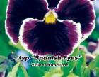 Maceška zahradní Spanish Eyes