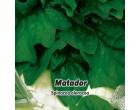 Špenát - Matador - semena špenátu 8g