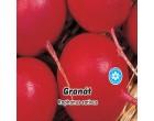 Ředkvička červená - Granát - semena ředkvičky 5g
