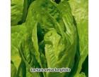 Salát římský - Verde Degli - semena salátu 0,8g
