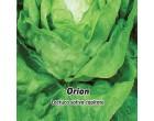 Salát hlávkový jarní i k rychlení - Orion - semena salátu 0,5g