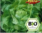 Hlávkový salát Ovation (Matilda) - BIO semena