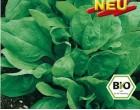 Špenát Tarpy BIO semena