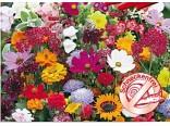 Květinová symfonie rezistentní šnekům