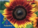 Slunečnice Pro Cut Bicolor