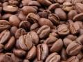 Kávovník - exotická rostlina s vyhlídkou vlastní pražené kávy