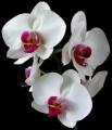 Pěstování orchidejí