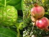 Exotické ovoce - pro opravdové milovníky pěstování
