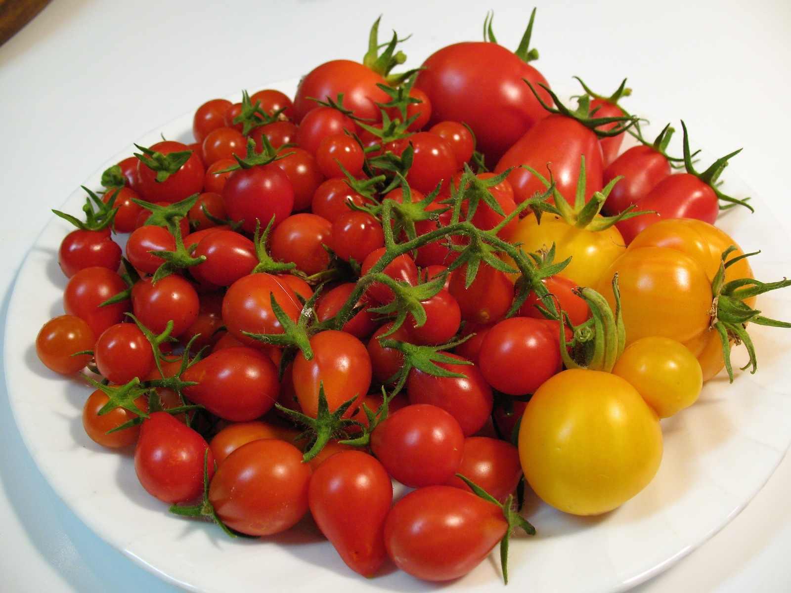 http://www.rostliny-semena.cz/galerie/rajcet_1353623434.jpg